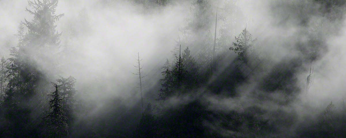 Morning mist in the Great Bear Rainforest